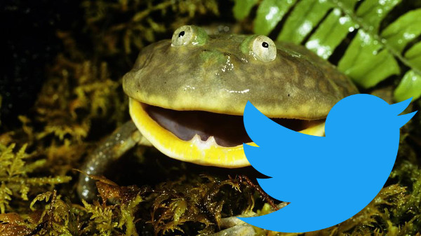 Will Twitter Croak?